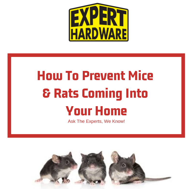 How To Prevent Mice & Rats Coming Into Your Home - Expert
